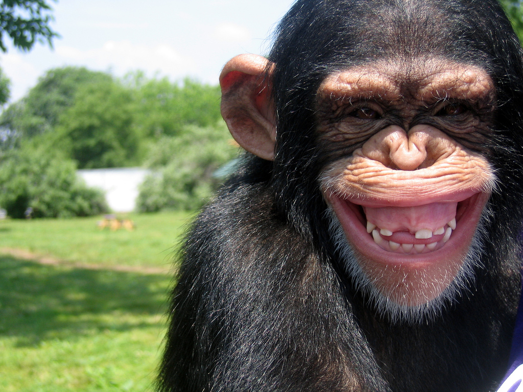 Chimp Grin